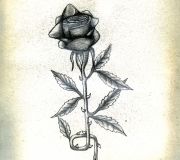 Rose Drawing by Mark