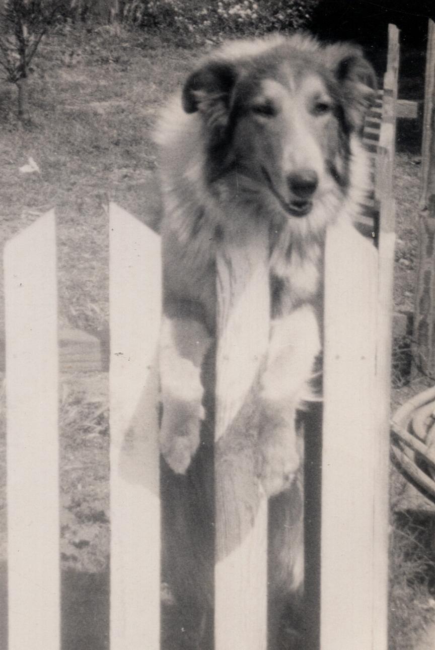 Lady (Darlene's Dog)