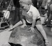 Buddy on Turtle