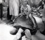 Mark on Turtle