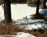 Mom Sledding in Big Bear